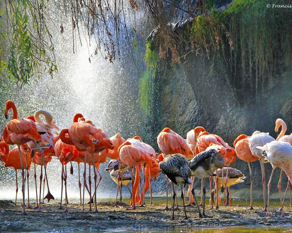 Charente - Maritime | Flamingo-busvakanties.be